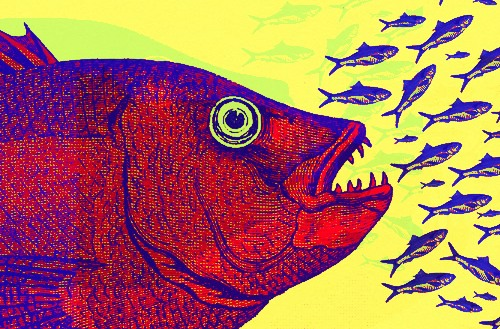 Image of large fish devouring smaller fish.